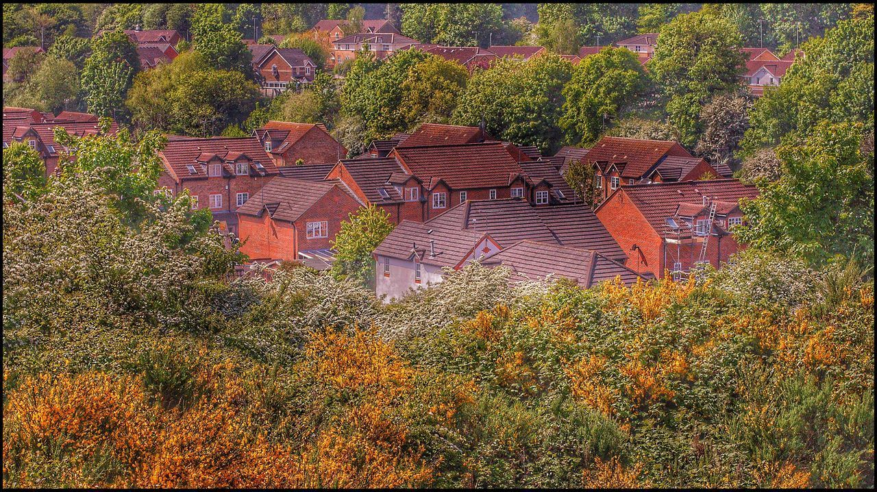 Colours of Summer Tree Roof No People Architecture Outdoors Day Building Exterior High Angle View Built Structure Nature Growth Plant Tiled Roof  Beauty In Nature 3XSPUnity Bristol Freshness HDR Hdr Edit Hdrphotography Hdr_pics