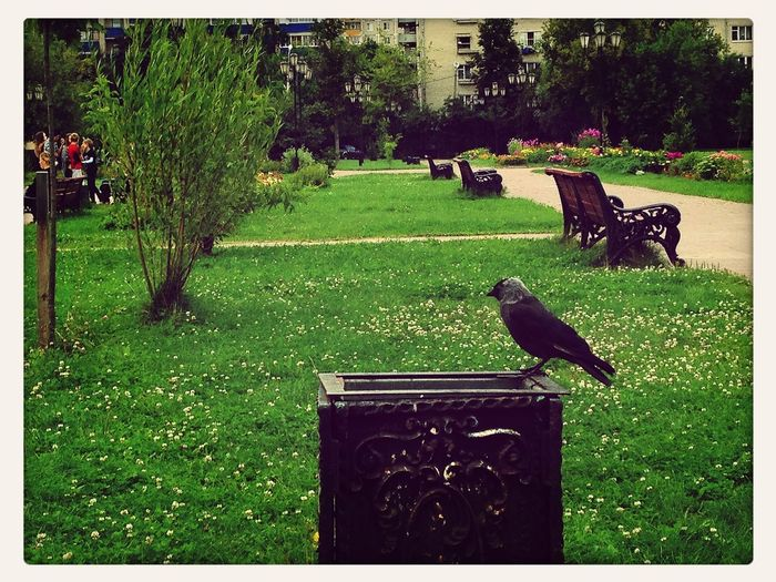 jackdaw ^^ EyeEm Best Shots Nature_collection Taking Photos EyeEm Birds