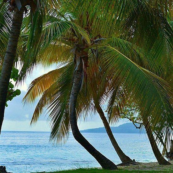 Pocket_beaches Pocket_sunsets Andyjohnsonphotography Teamnikon Grenada Ilivewhereyouvacation Westindies_landscape Westindies_pictures Ig_masterpiece Ig_today Ig_serenity Caribbean Livefunner Uncoveryours Nature_sultans Colors_ofourlives PureGrenada Photo_colection Artnetinstagram Amazingphotohunter Island360 Bushments Sunsets_sxmrrcadz