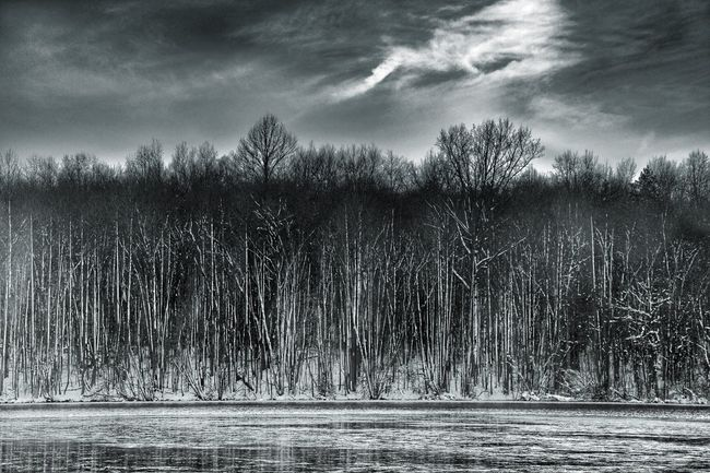 Winter Trees Monochrome Black And White Sky Trees And Sky Lake Snow Scene