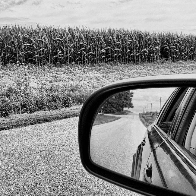 Rearview. Midweststateofmind Wander Explore Summer Picoftheday IPhoneography Farmland Corn Rearviewmirror Cornstalks Roadtrip