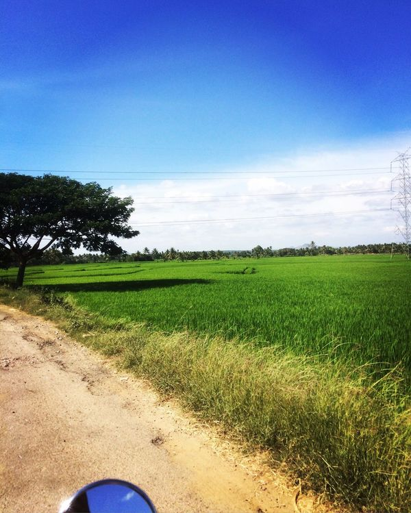 Green fresh and Sky Grass Tree Blue Nature Landscape Green Color Field Tranquility Growth Scenics Day Tranquil Scene Outdoors Clear Sky Beauty In Nature Low Section Real People One Person Human Body Part (null) First Eyeem Photo