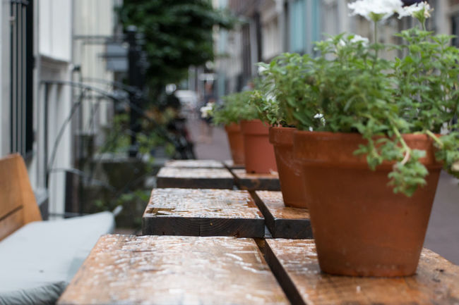 Flowers on the table Amsterdam Bench Closeup Flower Netherlands Relax Relaxing Moments Sit And Relax... Still Life Streetphotography Table Table With Flowers Table With Plants Your Amsterdam EyeEm X Google - Your Amsterdam