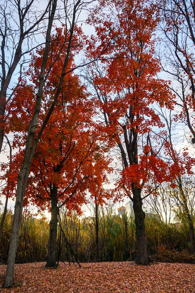 Trees And Sky Leafs Photography Colorful Trees Outdoors Photograpghy