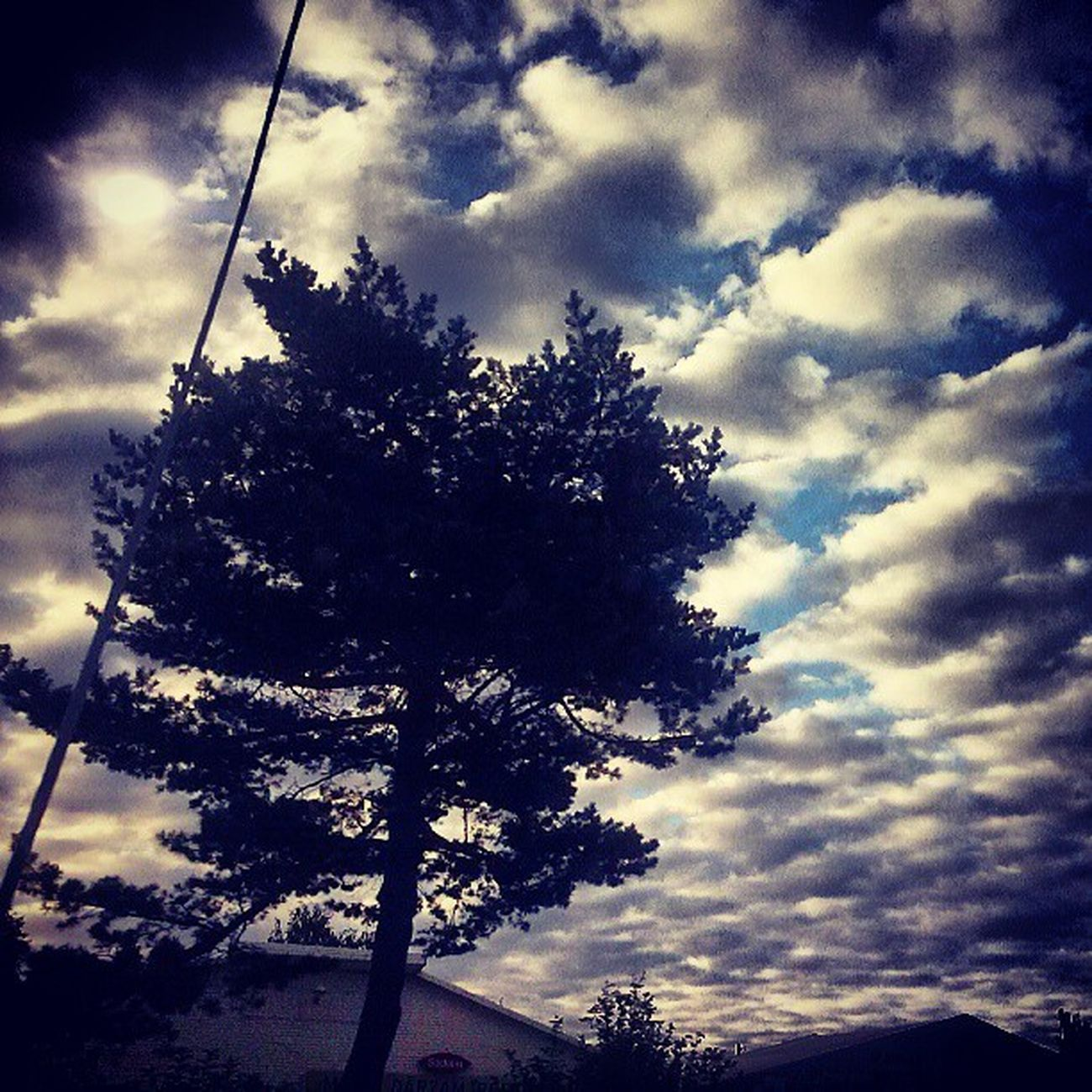 Tree Sky Clouds Nature sun summer summertime holiday weekend morning beautiful weather nice cute cool adorable like likeback followme ifollow teamfollowback good day goodday