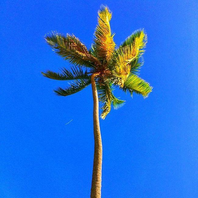 Ilivewhereyouvacation Ig_caribbean_sea Islandlivity Ig_caribbean Islandlife Grenada Westindies_nature Worldwide_shot Westindies_bnw Wu_caribbean Ourbestshot Awesomecaptures Allshots_ Hdrstylesgf Hdrzone