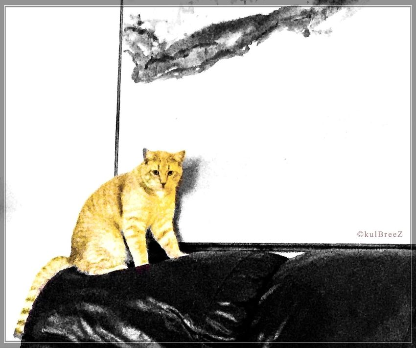 Art appreciation SandySeries Cat EyeEm Best Edits Streamzoofamily