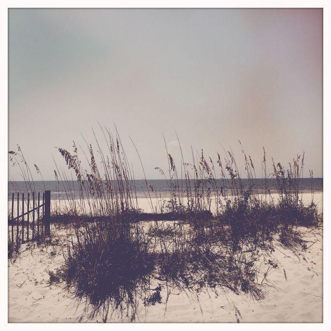 Beach Beach Photography Sand Dunes