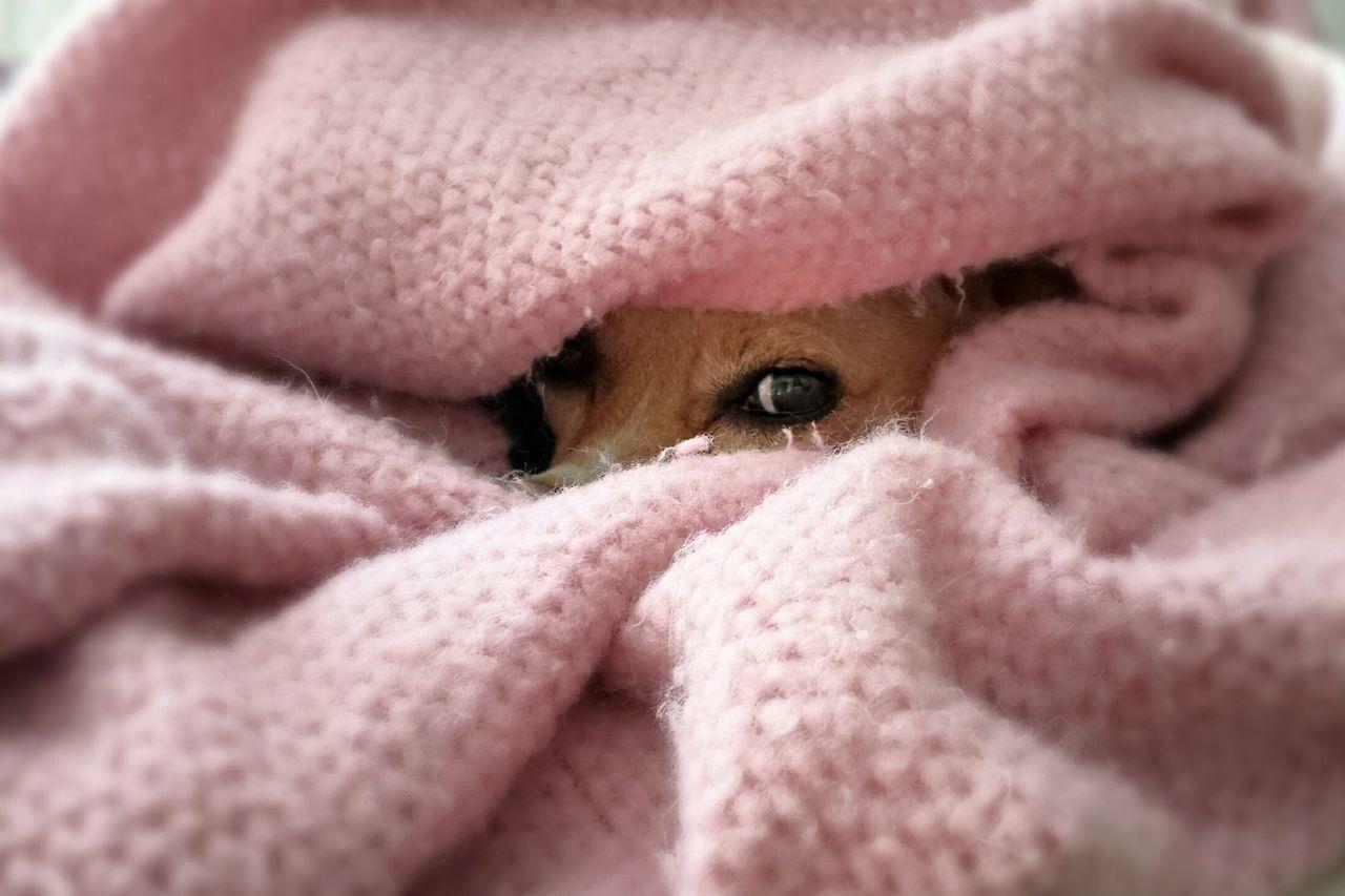 Dogs Sleepy Puppy Peekaboo Dog Days A Dogs Life Dog Doglife Peeking Pup Puppy Naptime Dog Napping Dog Nap