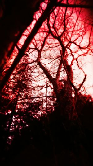 ...the red...Showcase: January The Trees The Color Red Sony Xperia Eerie Beautiful Eerie The Red Forest Beautiful Spooky The Forest Fun With Filters EyeEm Gallery Eyeemphotography Eerie Colors Spooky Nature From My Perspective Having Fun With Photography