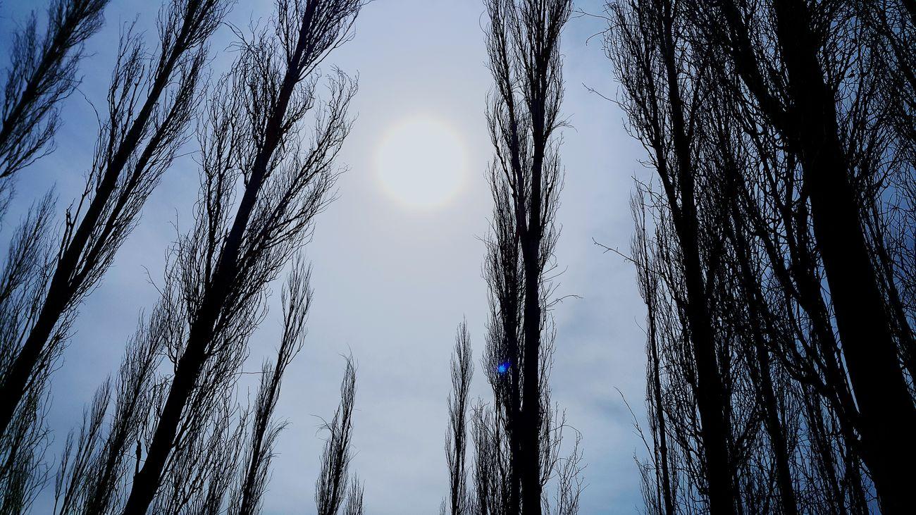 Sun Doğa Ağaç Gezi ☺😅 Doğa Matem