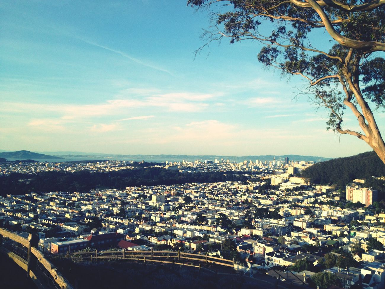 Why hello, San Francisco! Soaking Up The Sun San Francisco Nature City Life