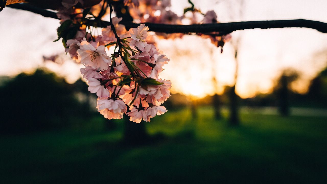 43 Golden Moments Nature Light Beautiful Exploring OpenEdit Photo Photography Photooftheday Check This Out Eye Em Nature Lover EyeEm Best Shots EyeEm Gallery City London LONDON❤ Picoftheday Bestoftheday Blossom Cherry Blossoms Cherry Blossom