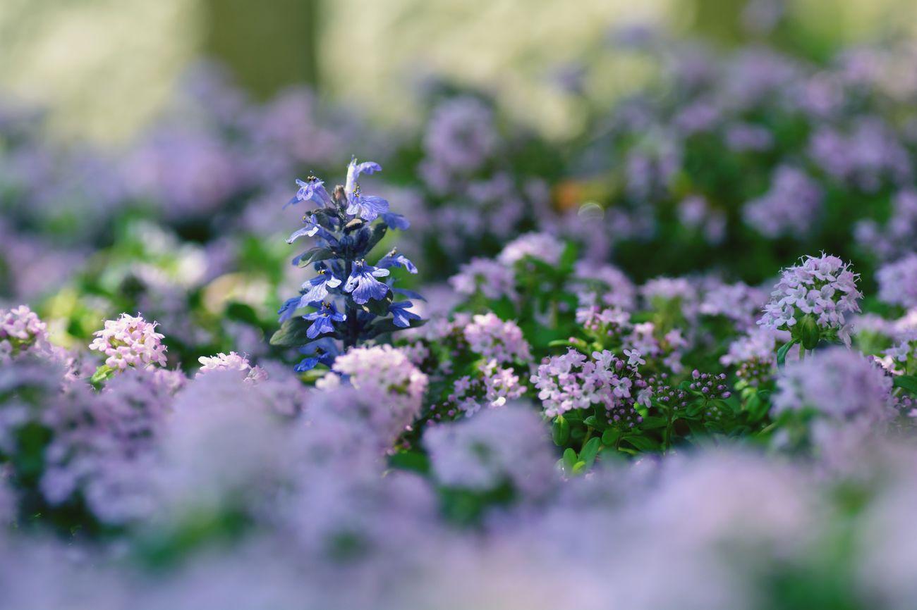 Violet By Motorola EyeEm 2015 Japan TAMROM 花 Happy Flower Nikon D5200 庭に咲く花 In My Garden...