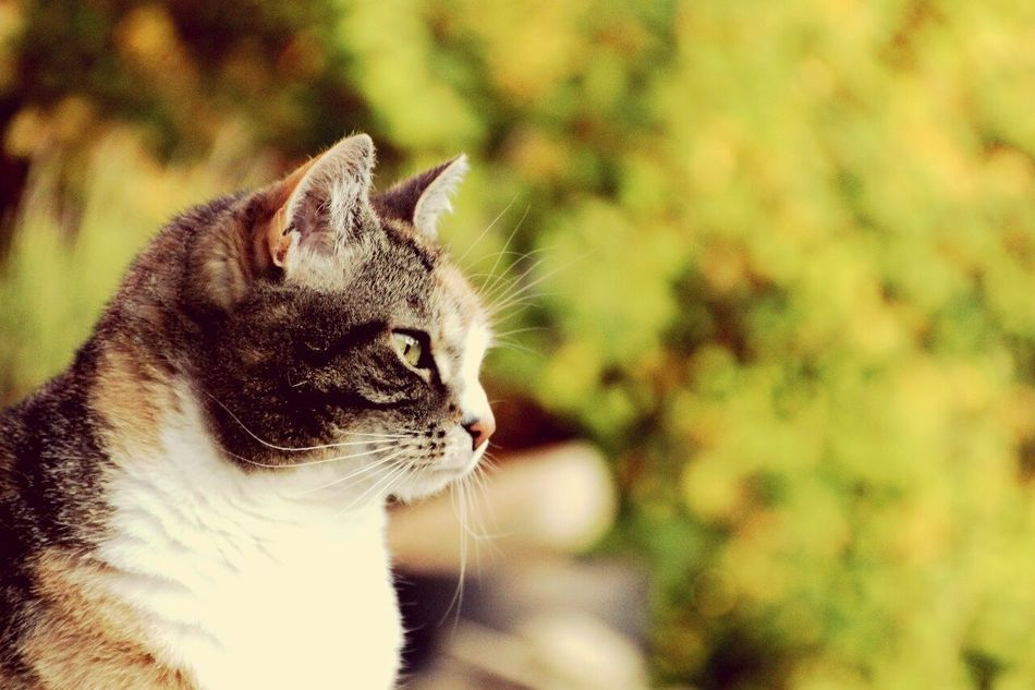 Cat♡ Canon700D Nature Colorfulcat Cat Lovers Tiefenschärfe Catoftheday Pictureoftheday Relaxing Hello World
