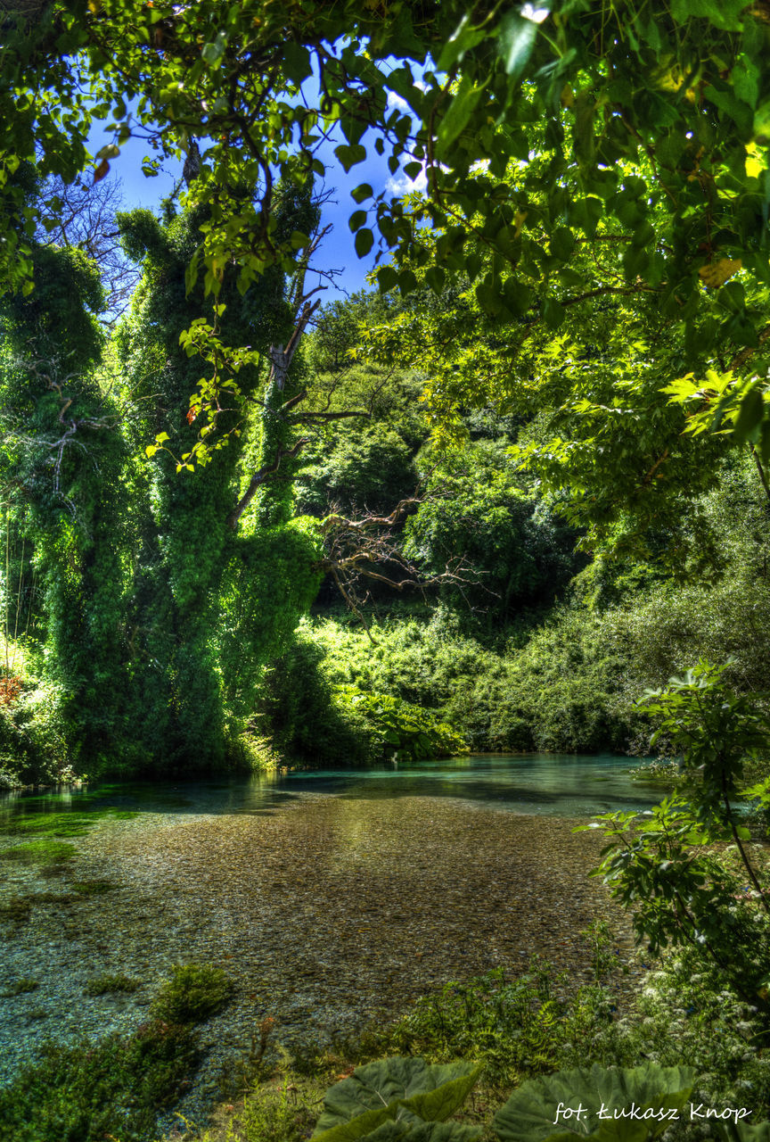 tree, nature, growth, lush, forest, tranquility, no people, flora, outdoors, vegetation, landscape, plant, day, beauty in nature, water