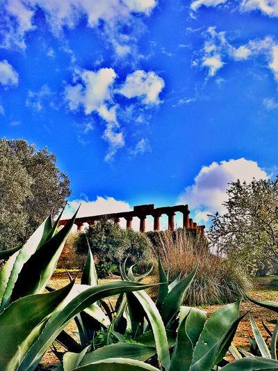 Landscape templi Landscape Templi Greci Agrigento Sicily Sicily ❤️❤️❤️