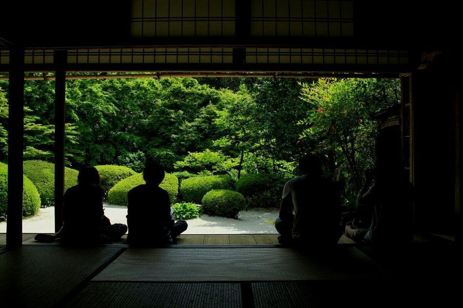 友達に会いに京都へ Japanese Temple Japanese Culture Travel Photography Light And Shadow Getting Inspired EyeEm Nature Lover