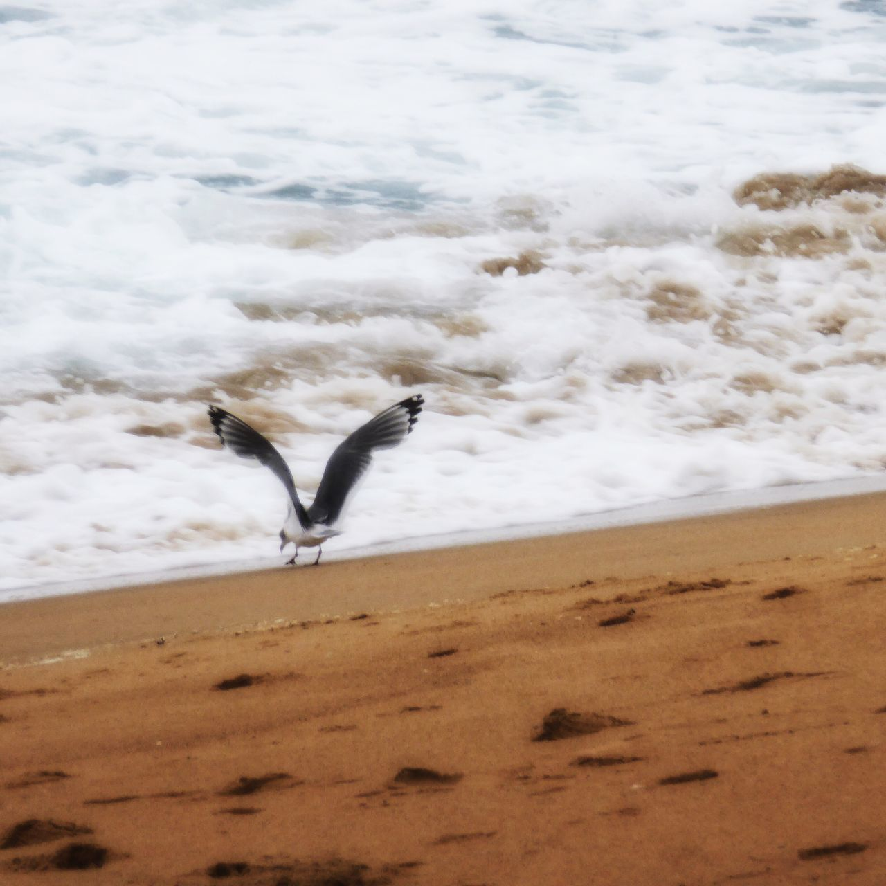 Spread Wings At The Beach Animal Themes One Animal Bird Beach Sand Nature Animals In The Wild Footprints In The Sand Bird Eating Bird Landing Water No People Animal Wildlife Beauty In Nature Scenics