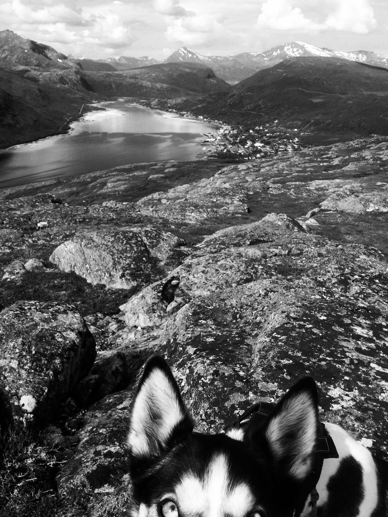 Photobombed by Alaskan Husky Blackandwhite Photography Black And White Bw_collection Black & White Bw_lover BW_photography Animal