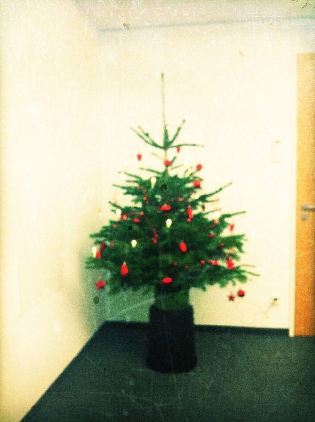 office christmas tree at Axel Springer Media Impact Office Christmas Tree
