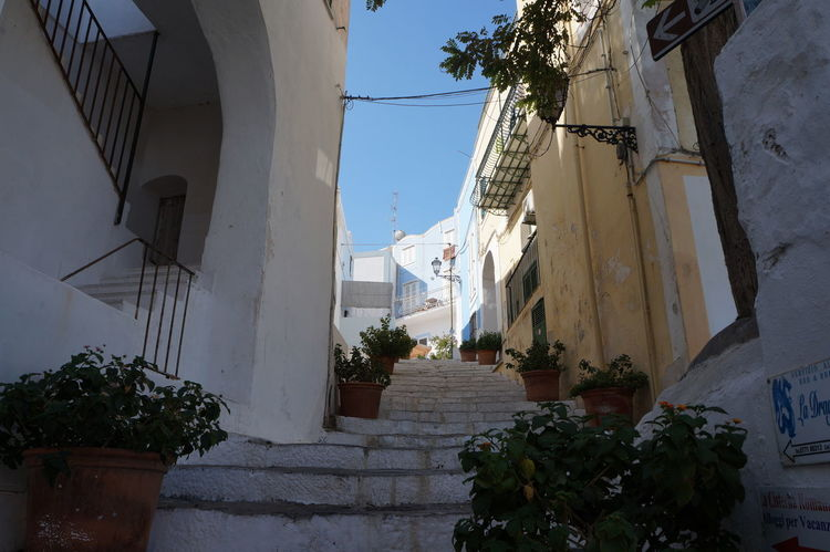 Stairs Architecture Building Exterior Built Structure Day Growth House Island Low Angle View No People Outdoors Plant Potted Plant Residential Building Sky Steps And Staircases Tree Village Whitewashed