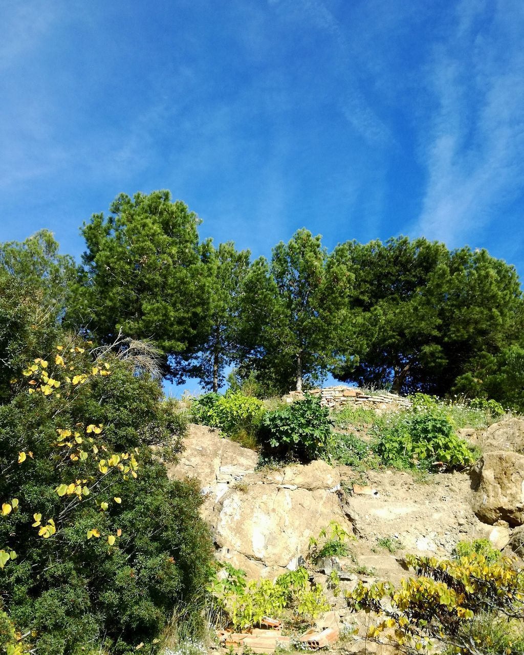 tree, growth, nature, outdoors, day, tranquility, beauty in nature, plant, no people, tranquil scene, blue, scenics, sky