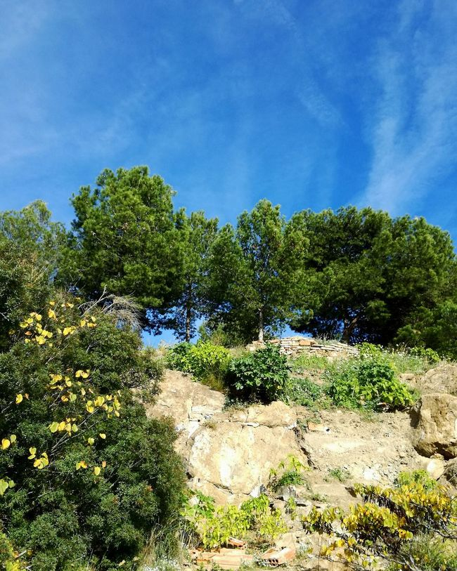 Tree Growth Sky Sunlight No People Nature Outdoors Day Green Color Beauty In Nature Scenics Freshness Blue Color Rocks Mountain Lost In The Landscape