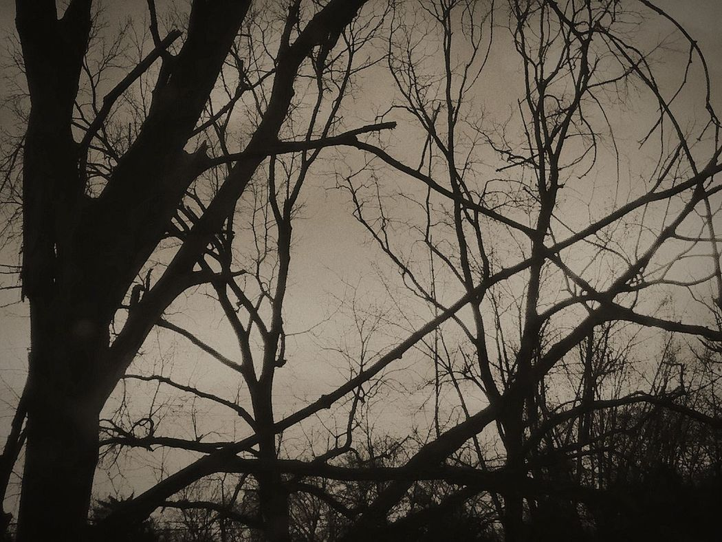 My back yard Silhouette Branch Low Angle View