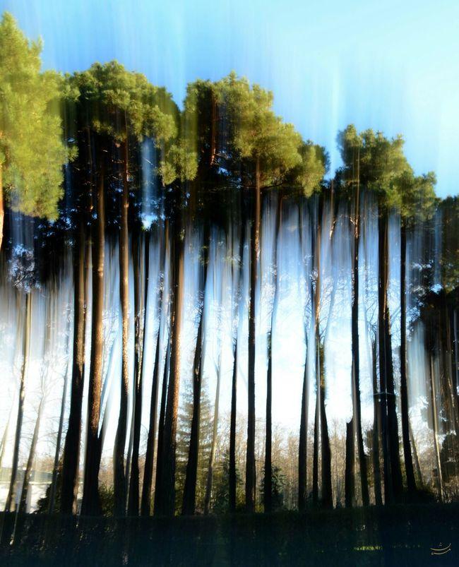 Trees Tree Art Tree And Sky Tilt Shift Effect Ampersionism Nikonphotography EyeEm Best Shots Sun Light New Years Resolutions 2016 Iranian Garden