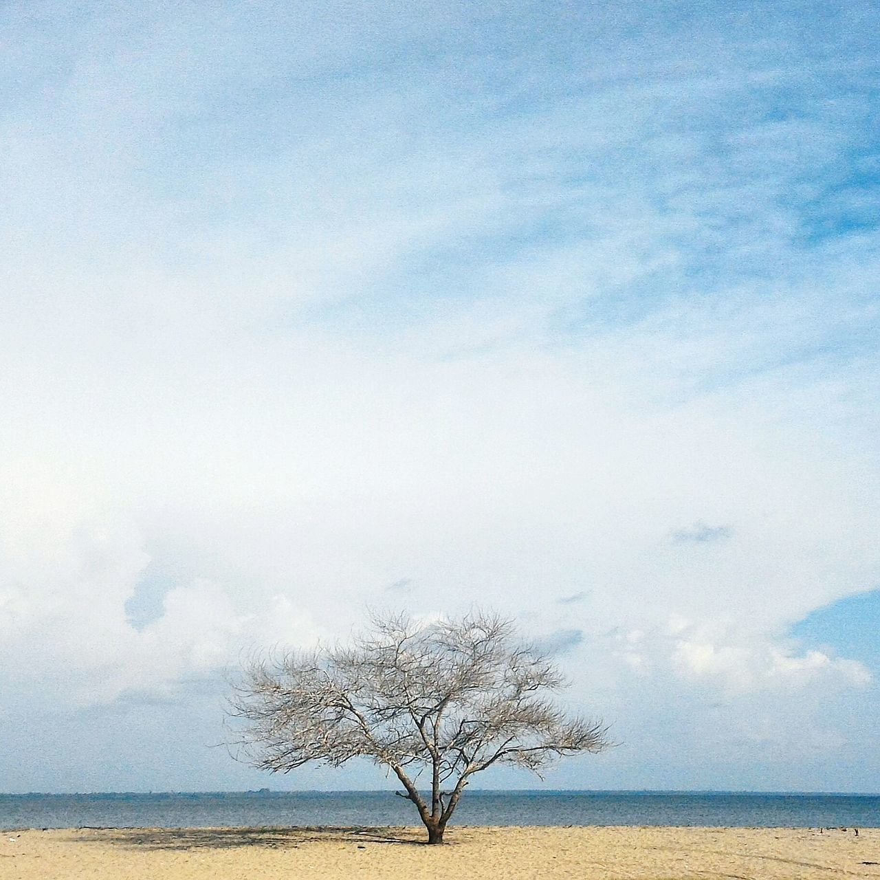 Tree Sky Nature No People Beauty In Nature Outdoors Single Tree Alone Lonely Objects Loneliness Beach Barren Trees Water Day Survival
