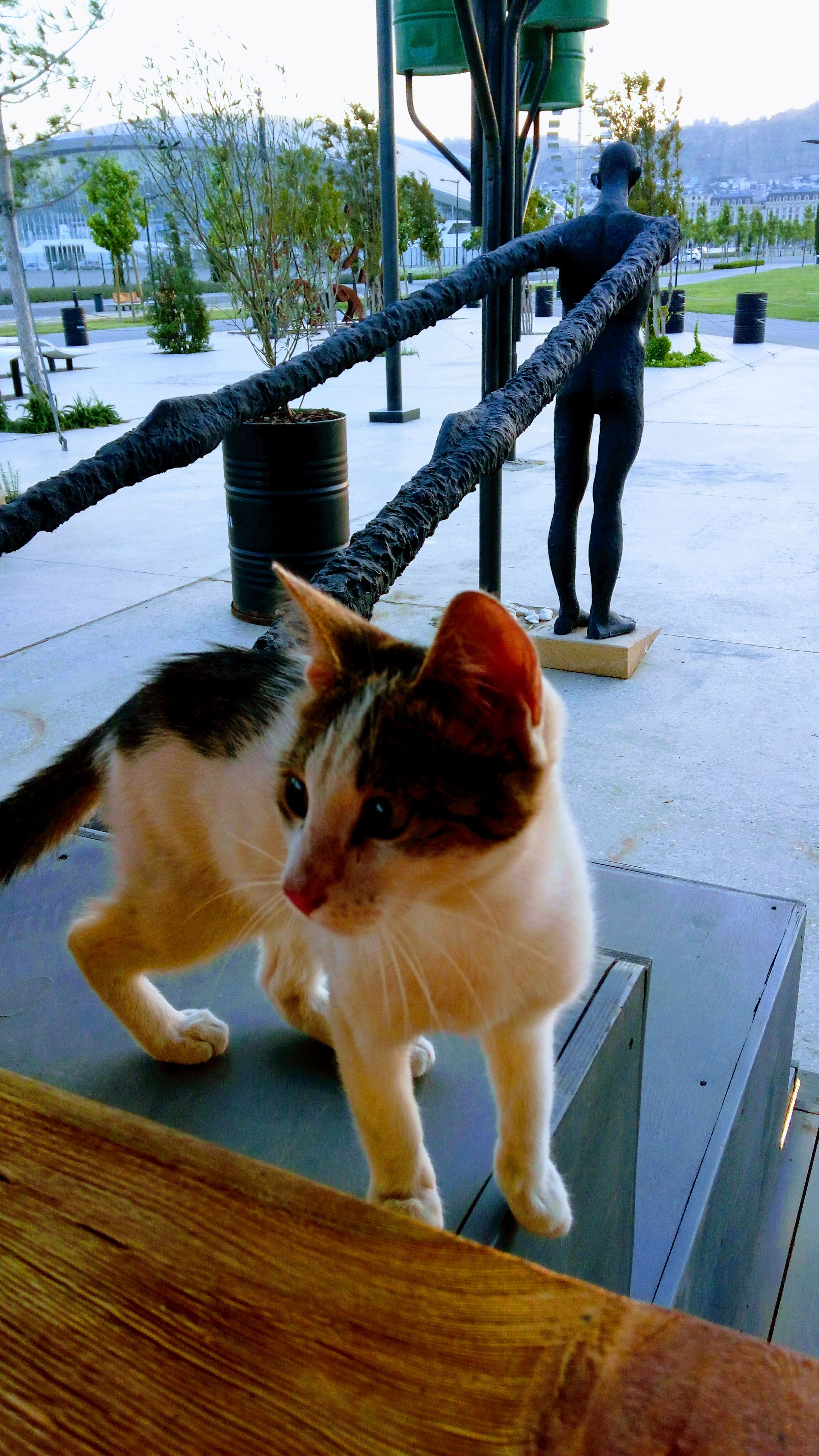 Domestic Animals Animal Themes One Animal Outdoors No People Barrel Playground Wandering Cat