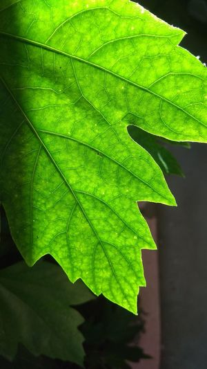 Perspectives On Nature Leaf Green Color Nature No People Growth Close-up Day Outdoors Beauty In Nature Freshness