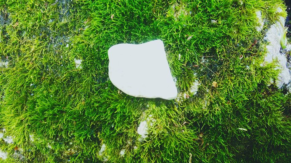 White Rock, Rock, Polished White Rock, Decorative, Natural, Pattern, Textures, Stone, Stone And Rock, Rock Garden, Garden, White, Stone Garden, Pebble, White Pebble Happy Moss