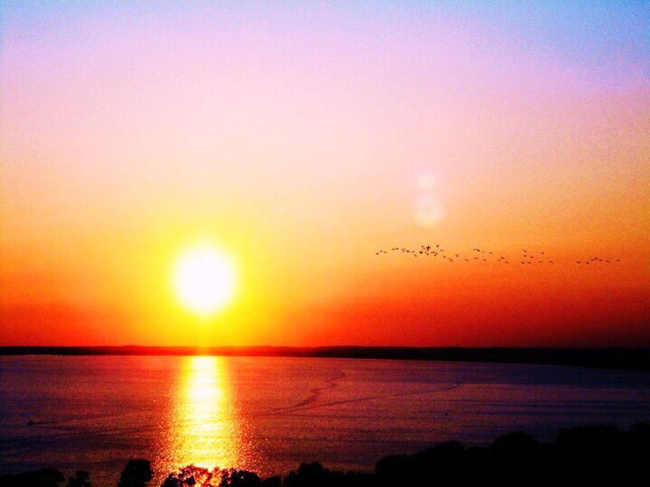 Sunset Bird Birds Flock Of Birds Skyline Water Reflection Sun Into The Sun