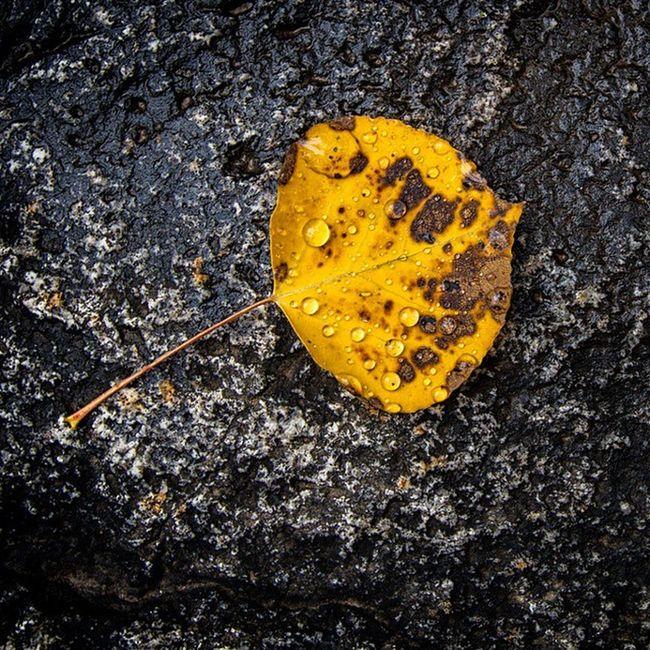 Rain drop covered Autumn leaf Utah Autumn Rain