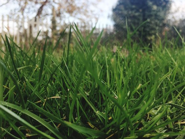 Growth Nature Green Color Grass No People Outdoors Close-up Day Field Tranquility Beauty In Nature Tree EyeEm Nature Lover EyeEm Nature Nature_collection Nature Photography