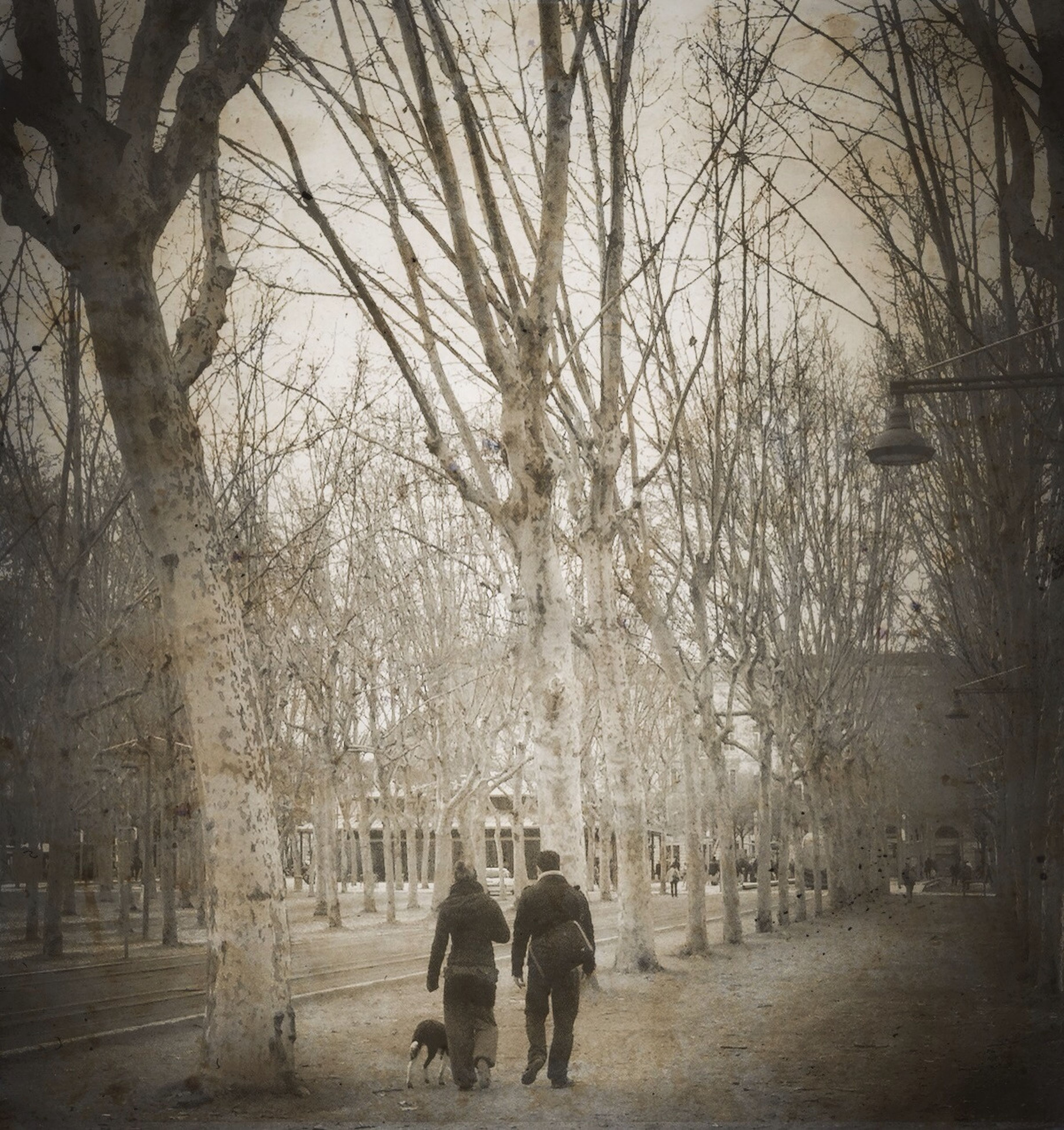 lifestyles, walking, rear view, full length, men, tree, leisure activity, person, togetherness, bare tree, season, the way forward, weather, bonding, winter, standing, footpath