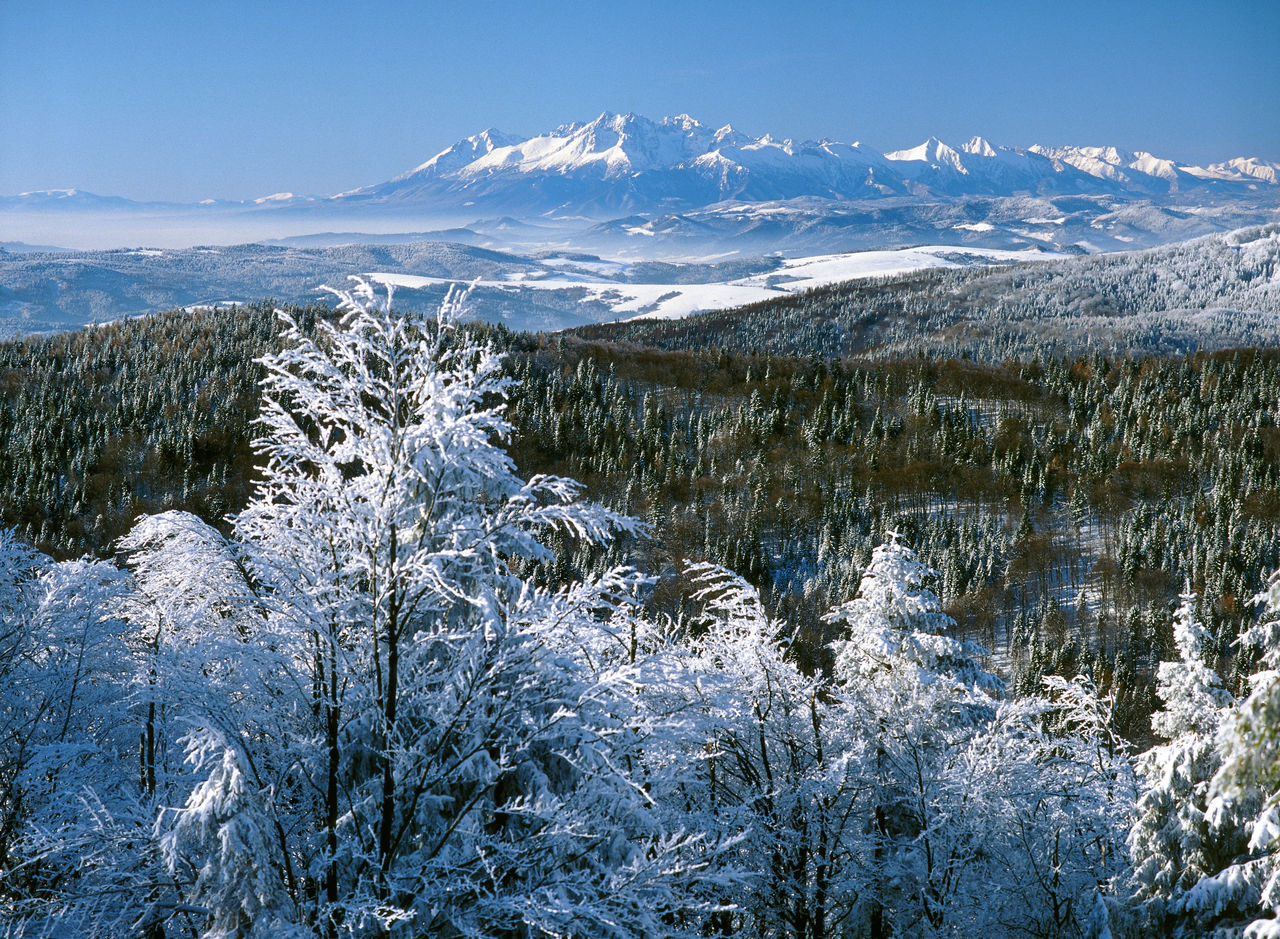 Beauty In Nature Clarity Cold Temperature Forest Frost Idyllic Inversion Landscape Majestic Mountain Mountain Range Nature Non-urban Scene Poland Scenics Season  Snow Snowcapped Mountain Space Tatry Travel Destinations Tree Visibility Weather Winter