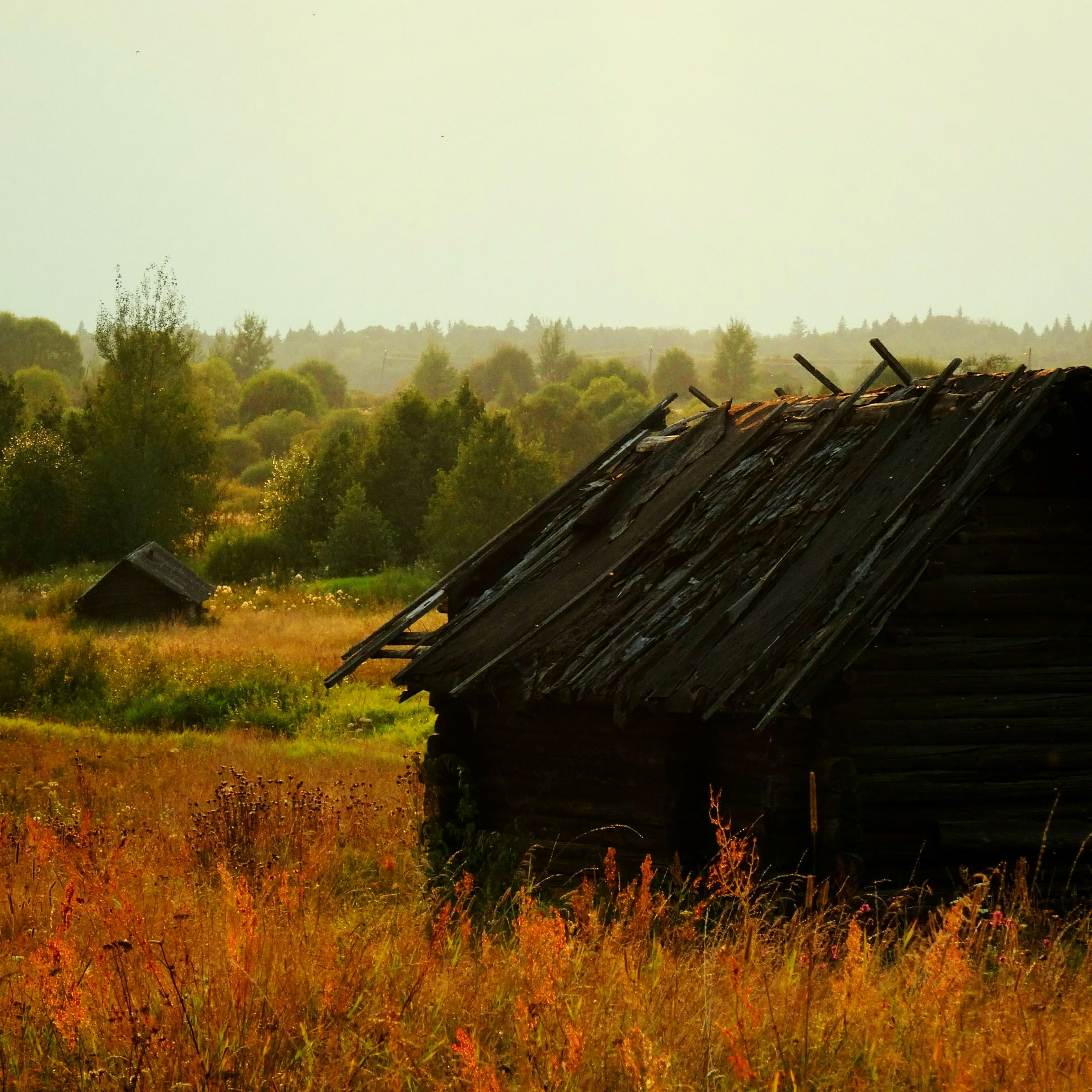 field, grass, clear sky, rural scene, landscape, wood - material, abandoned, agriculture, plant, growth, tranquility, farm, nature, tranquil scene, copy space, built structure, old, house, day, damaged