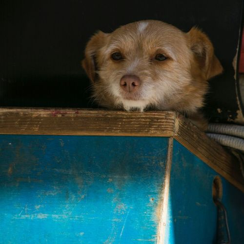 Dog box Shade Safety Shelterpets Looking Out Headshot Blue Pssst Keep Still..