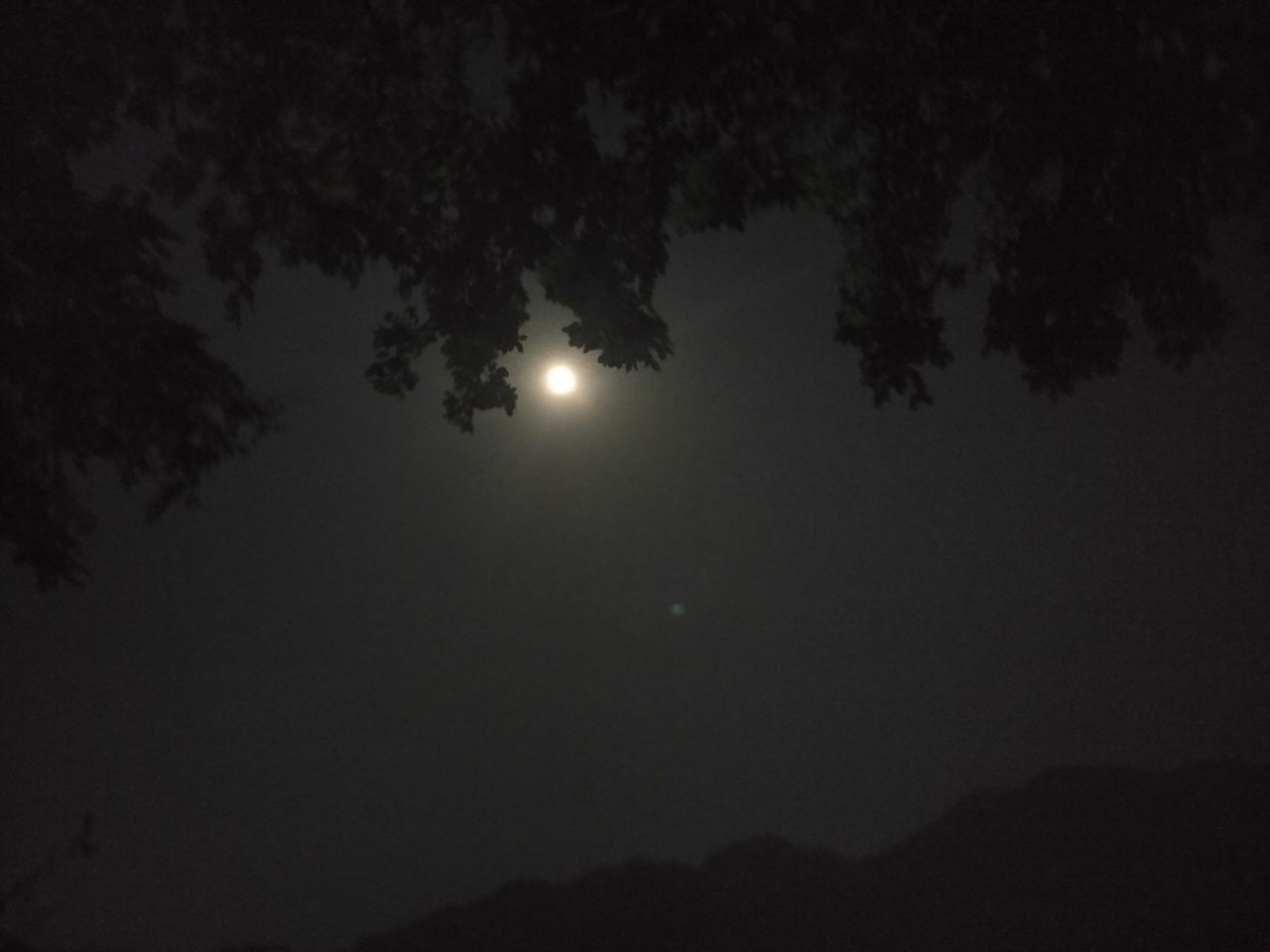 Moonlight Night Moon Nature Beauty In Nature Sky Outdoors Natural Phenomenon Supermoon 2016 EyeEm Nature Lover Oneplus2 No People Trees My Year My View