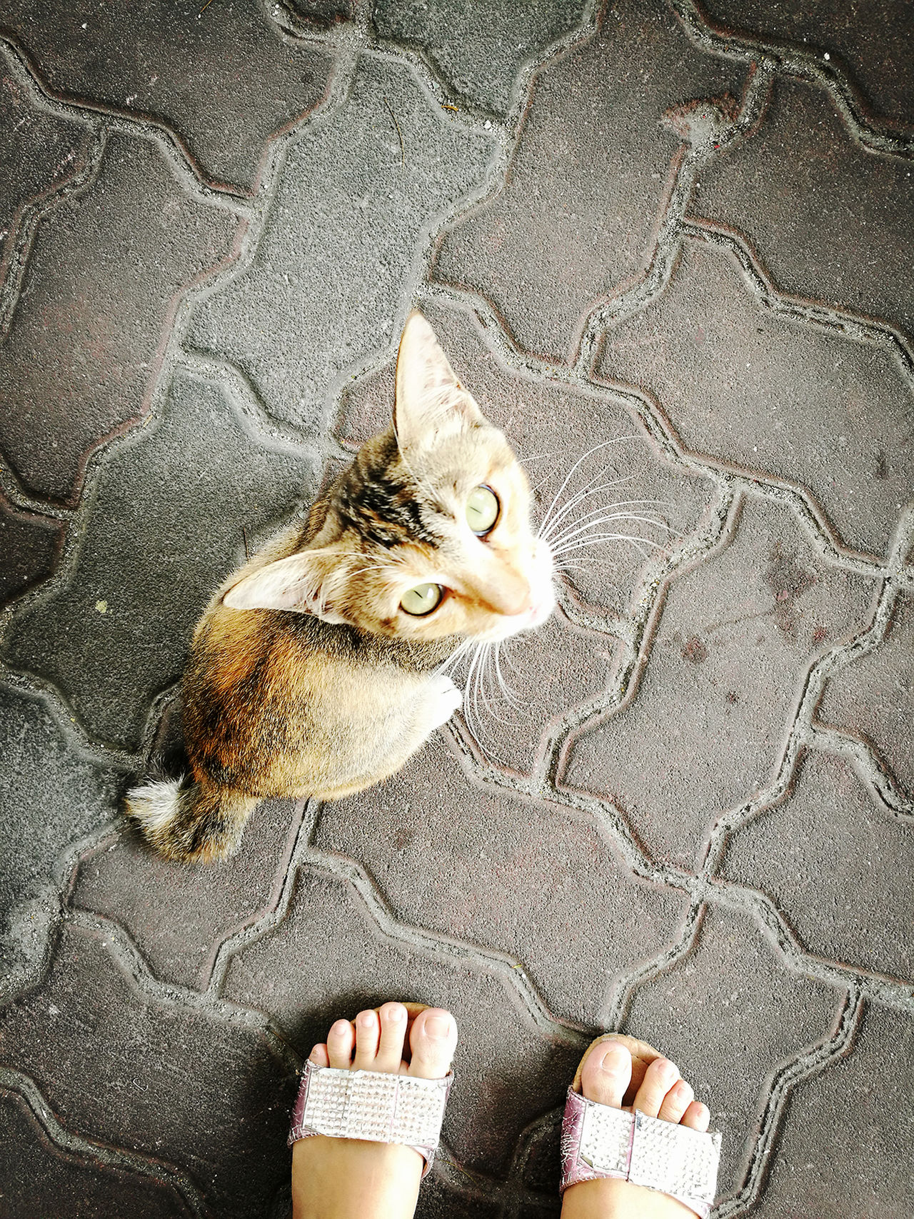 Little homeless kitty in front of restaurants. Pets Animal Animals Kitty Cat Cats Homeless Homeless Cats Homeless Animal Cute Lovely Lovely Cat HuaweiP9 Hua Wei P9 Plus Huawei P9 Plus Lonely