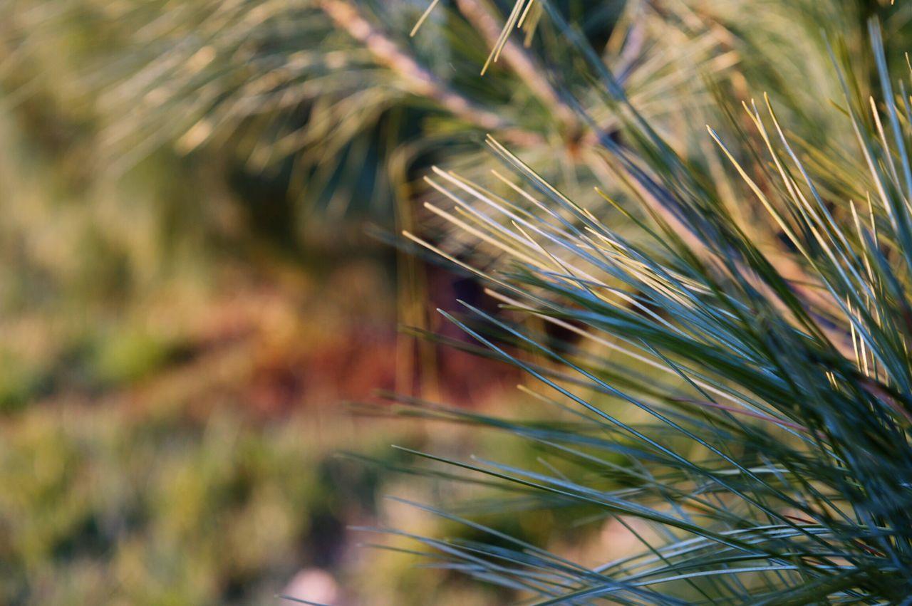 Tree Focused Outdoors Outfocus