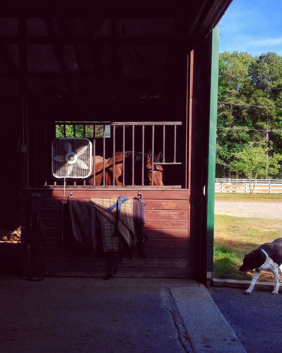 """My Hobby - A Horse or is rarely just a """"hobby"""", but are instead more of a grand passion. The equine life can be hard to capture in a photo. You are generally doing some barn chore or another (not photographing) and barns are notoriously dark. However, Afernoon offers up some nice light. Hanging Out At The Barn in Virginia"""