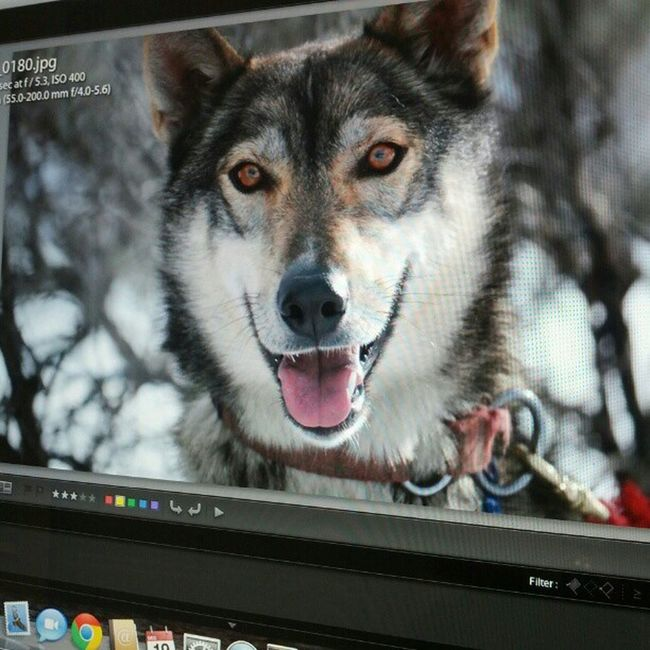 Nothing like some late night editing Hellodoggy Lightroom