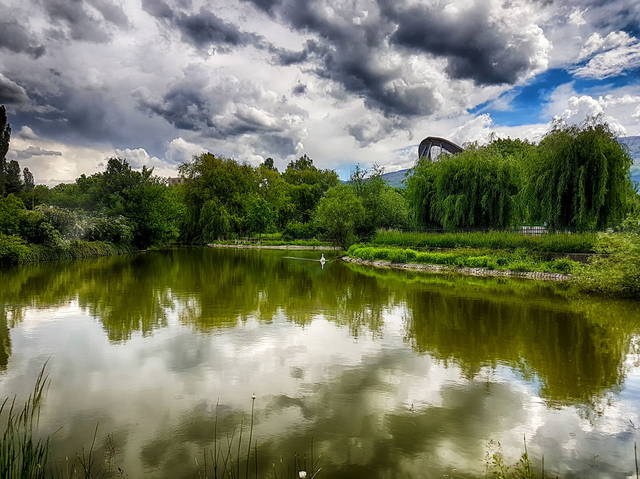 tree, reflection, cloud - sky, water, green color, sky, tranquil scene, nature, scenics, waterfront, lake, beauty in nature, no people, tranquility, outdoors, day, growth, grass