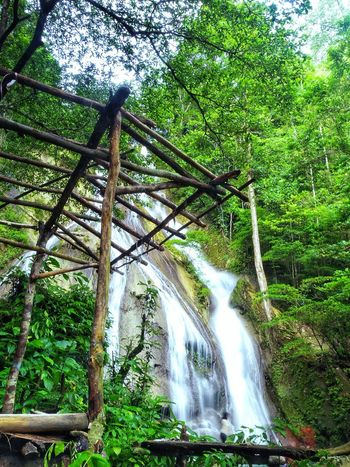 Tree Nature Water Low Angle View Outdoors Growth Green Color Beauty In Nature Forest Day No People Scenics Waterfall Sky Landscape Mountain EyeEm Nature Lover Vacations Summer AmbonIsland Lifestyles Swimming Long Exposure Tree Grass