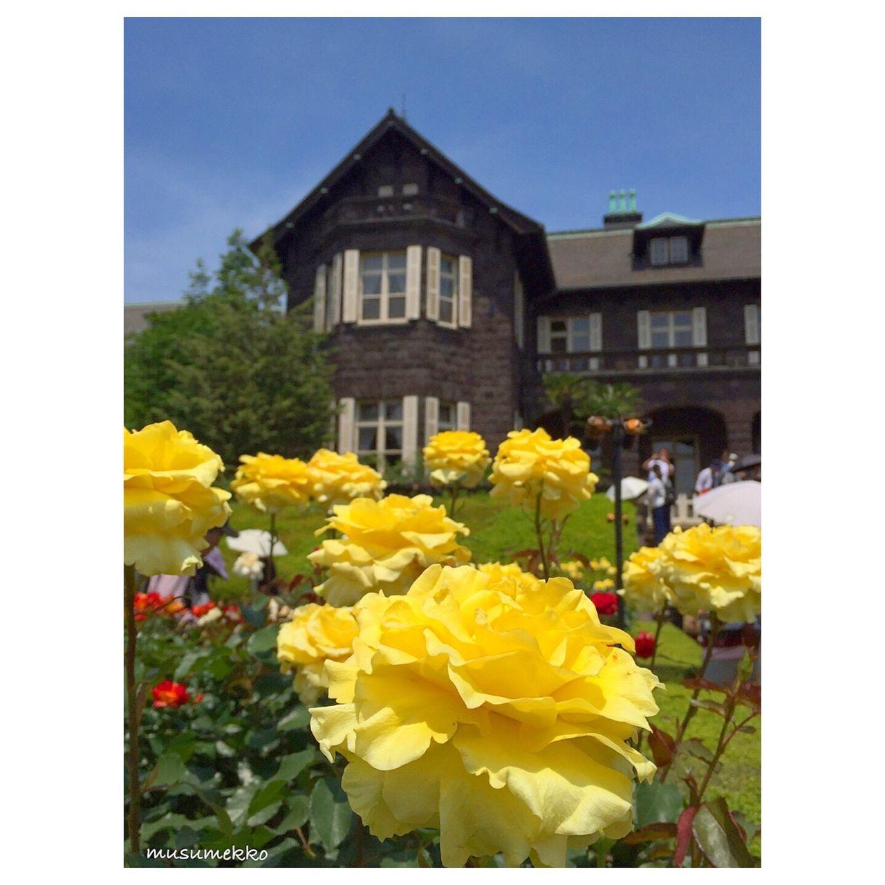 見頃を過ぎてしまったバラが多かったけど、このバラは見頃でした。 Beautiful Nature Tokyoscape Japan Photography Nature_collection Landscape_collection EyeEmNatureLover EyeEm Best Shots - Nature IPhoneography Relaxing Rosé Yellow Flower バラ 黄色 風景 建築 Architecture
