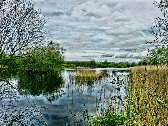 Somerset Levels Uk Wetland Park Bird Sanctuary Walking Around Taking Pictures